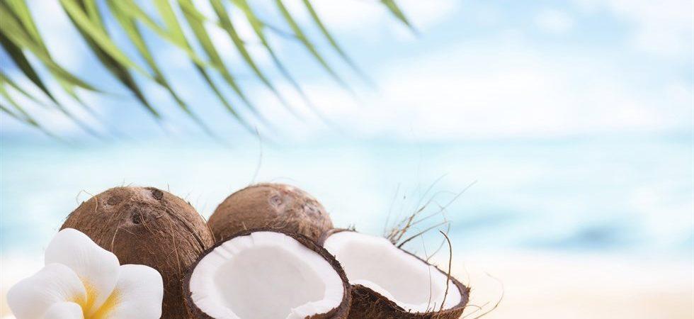 cocco-mare